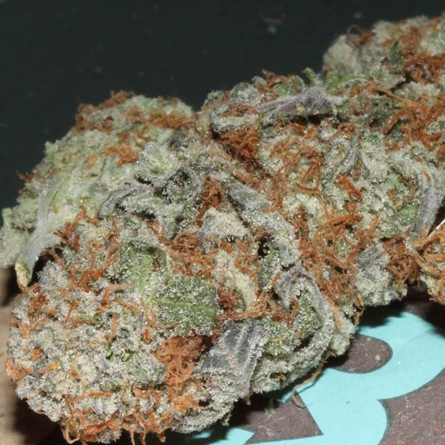 old-school-reeferman-genetics-ubc-chemo-strain-v2-feminized-web