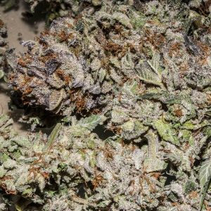 reeferman-genetics-Pink-Kush-old-school-feminized-seed-bud