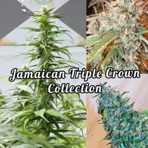 Jamaican Triple Crown