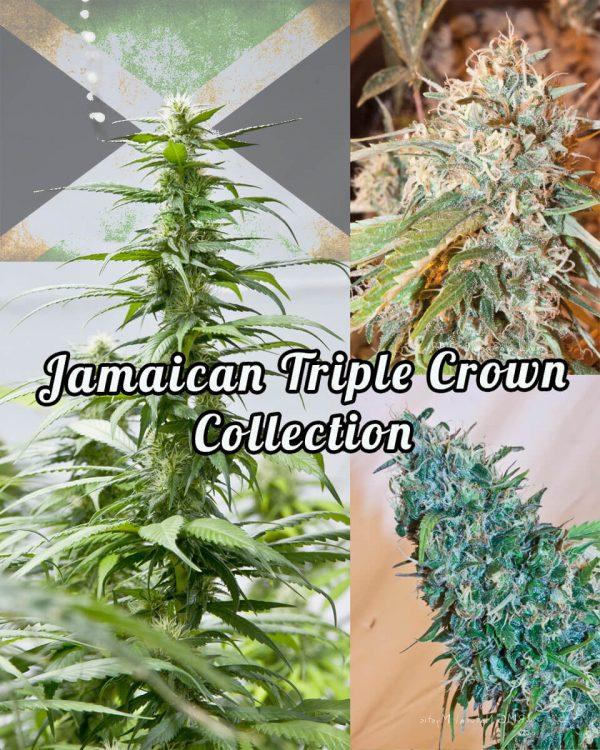 Jamaican Triple Crown
