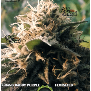 grand daddy purple feminized oldschoolba