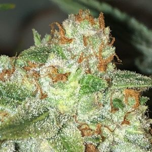 Mandarin Cookies Flower
