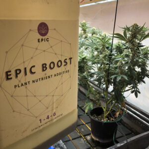 Cannabis hydroponic bloom boost