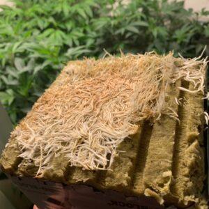 Old School BA best-cannabis-grow-tips